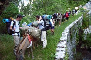 Randonner sur le sentier cathare avec des ânes
