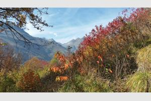 La végétation aux couleurs de l'automne