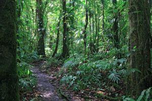 Le sentier parcours la forêt dense humide