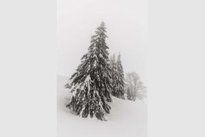 Habillées en neige