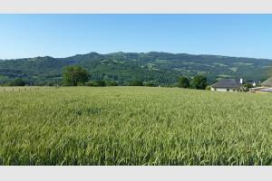 Champs de blé dans la vallée