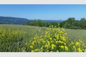 Bleu vert jaune : le printemps est bien là en Aveyron !