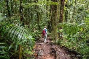 Balade facile dans la jungle