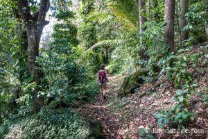 Sentier facile dans la forêt de Trois Rivières