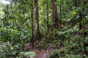 Nous marchons dans la jungle