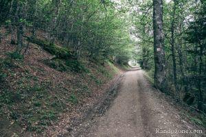 Large piste pour taverser la forêt