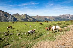 Plateau avec les chevaux