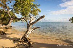 Eaux claires de Marie Galante en Guadeloupe