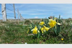 Le printemps renait dans le Parc Naturel d'Aubrac