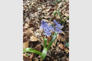 Fleur des sous bois, commune de Druelle, en Aveyron