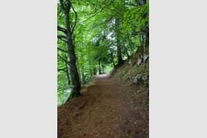 Début de la randonnée autour du lac Pavin en Auvergne