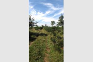 Draille sur Aubrac, sentier pour les troupeaux