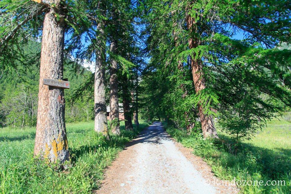 On va bientôt entrer dans la forêt