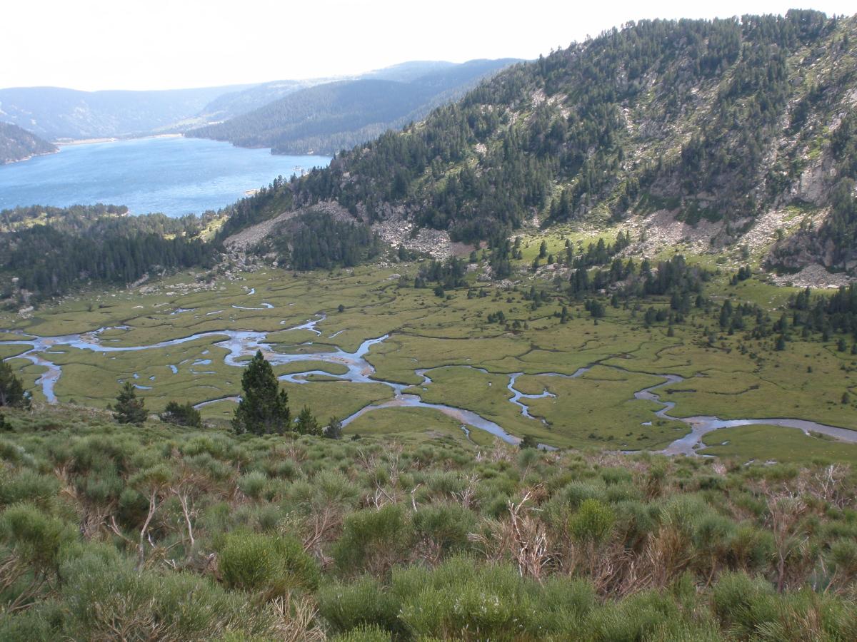 Lac des Bouillouses et marécage