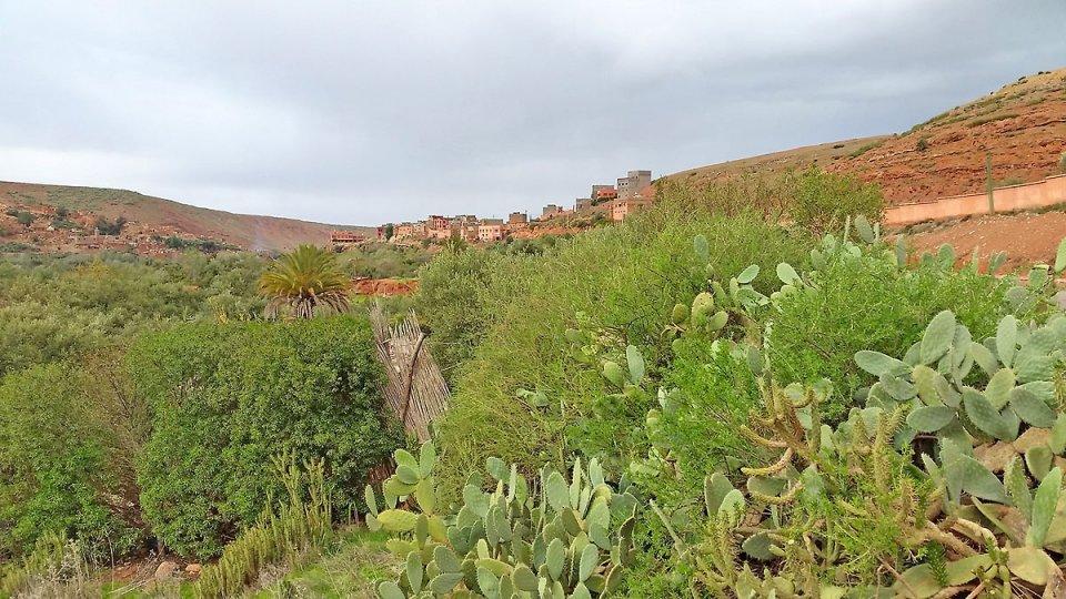 Cactus et joli village au Maroc