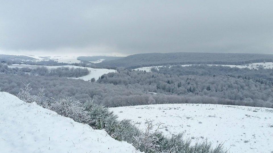 La forêt est recouverte de neige