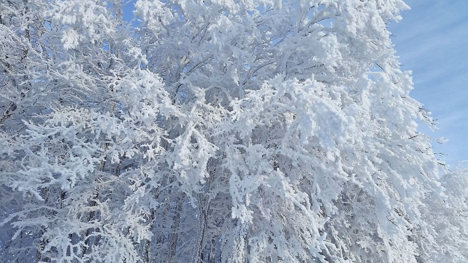 Arbre recouvert de neige au petit matin