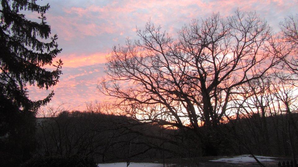 Début de coucher de soleil sur le bois