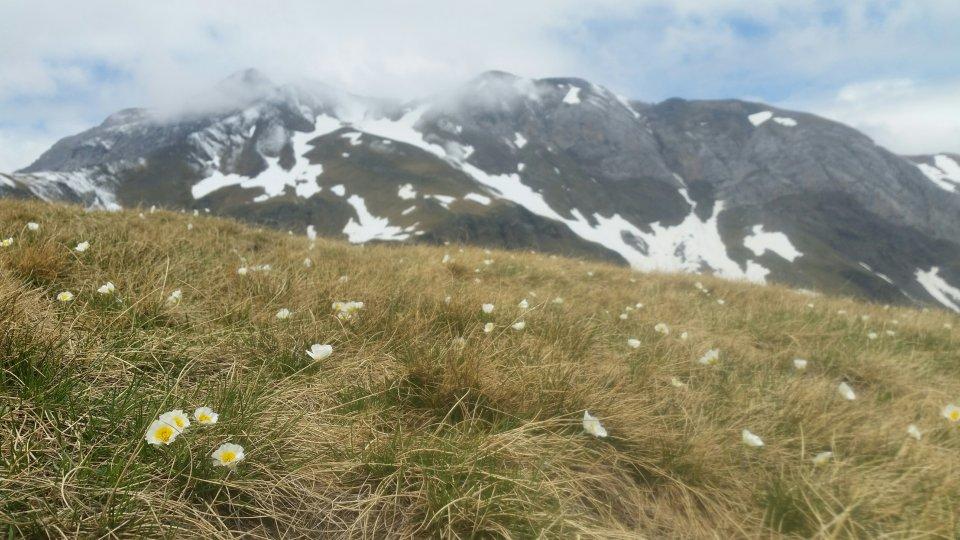 Vers le Col de Tentes bien fleuri
