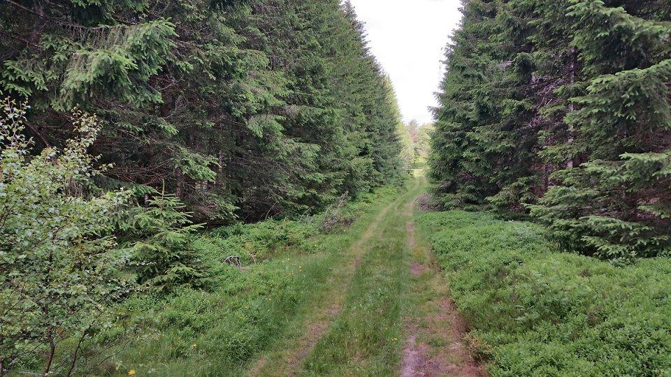 Sentier bordé de bois près du sommet du puy