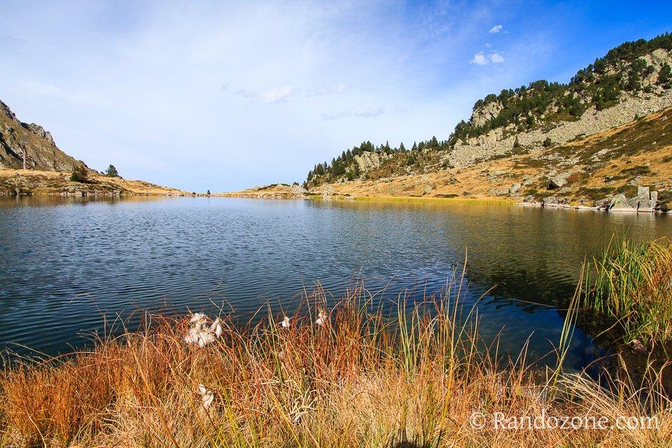 Linaigrettes au lac de Caderolles