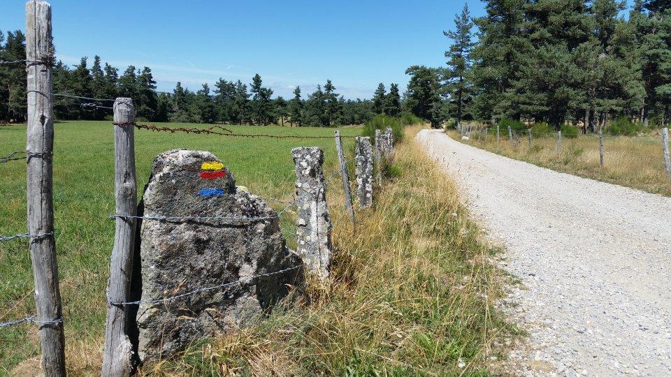 Chemin entre bois et paturages