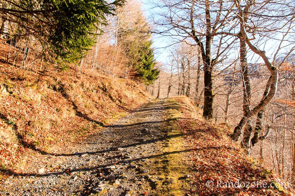 Début de la randonnée dans la forêt
