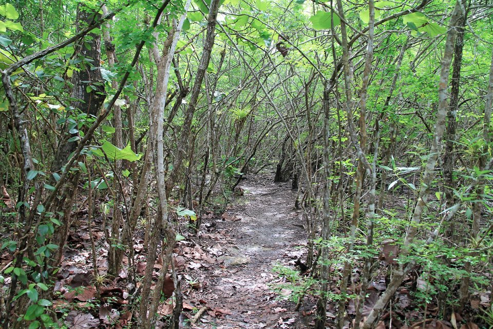 Le chemin traverse la mangrove