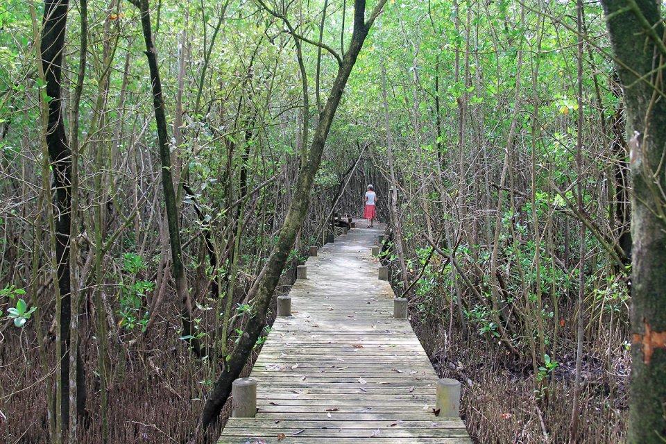 La traversée de la mangrove continue de ce côté