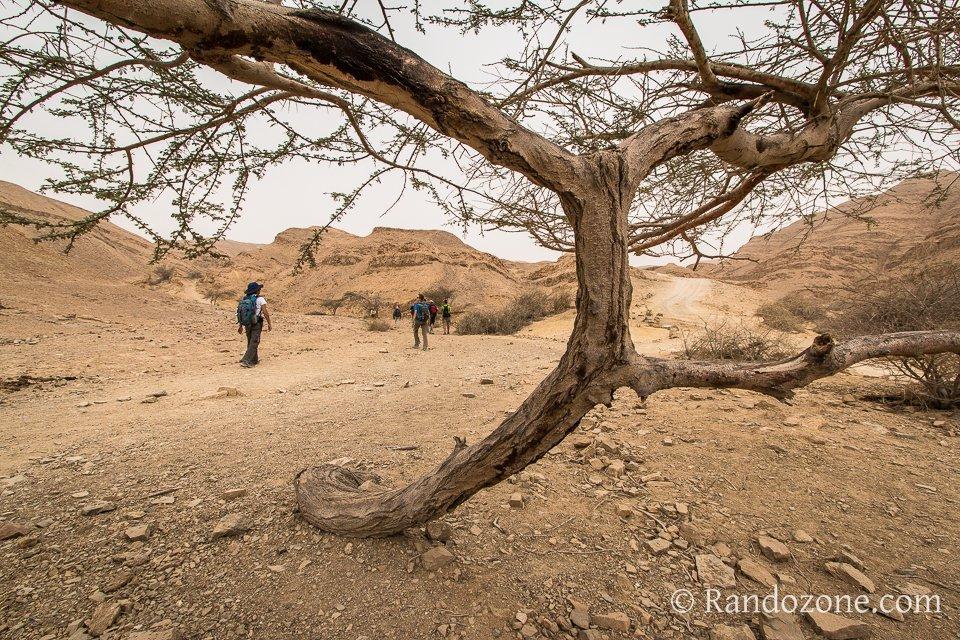 Nous marchons dans le désert du Néguev