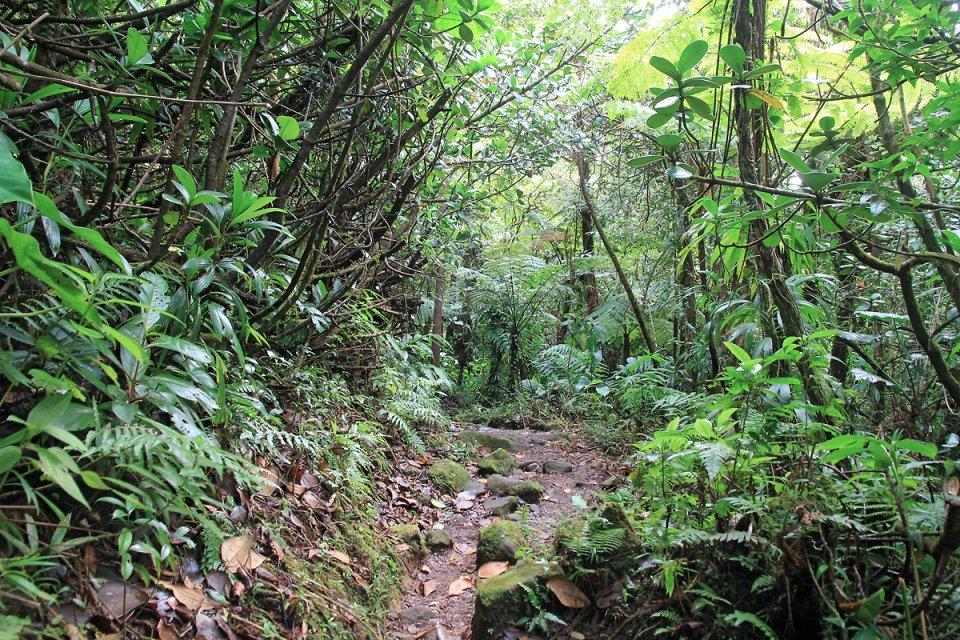 Le chemin passe à travers la foret humide