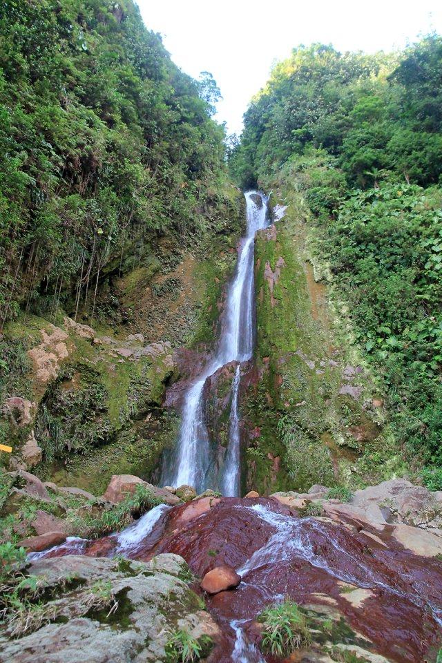 Dans le Parc National de la Guadeloupe