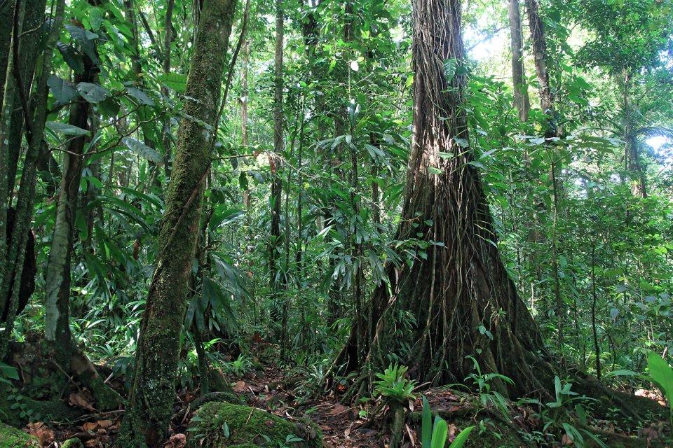 La végétation est dense et luxuriante