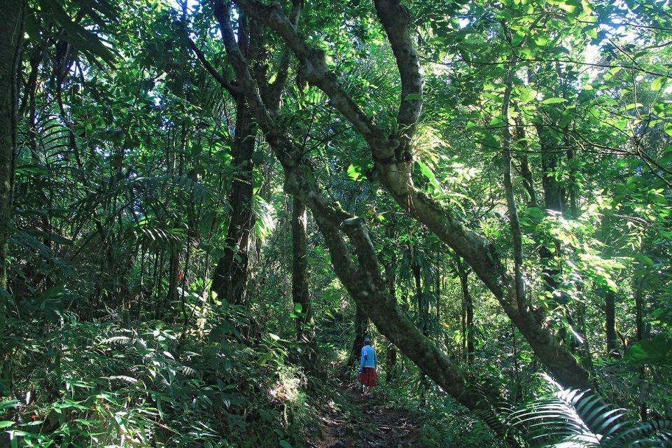 Progression dans la forêt humide