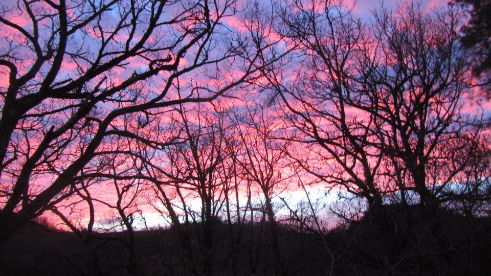Le ciel s'embrase à travers les arbres