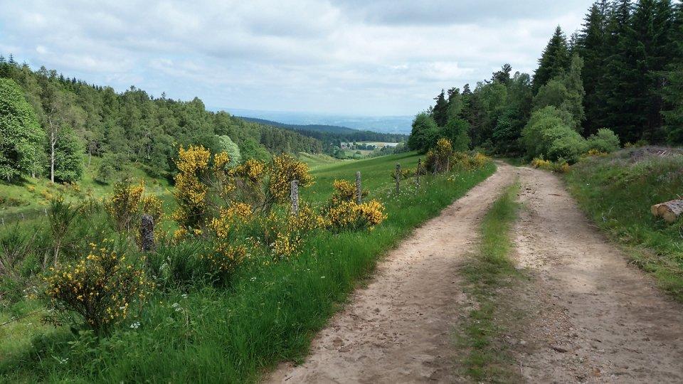 Chemin forestier sur le retour