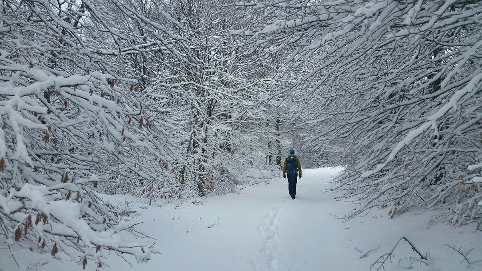 Promenons-nous dans les bois blancs