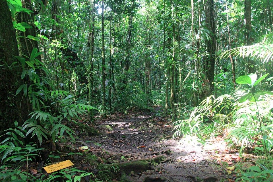 On se croirait dans la jungle !
