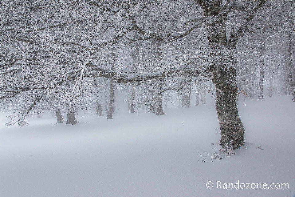 Forêt d'Aubrac