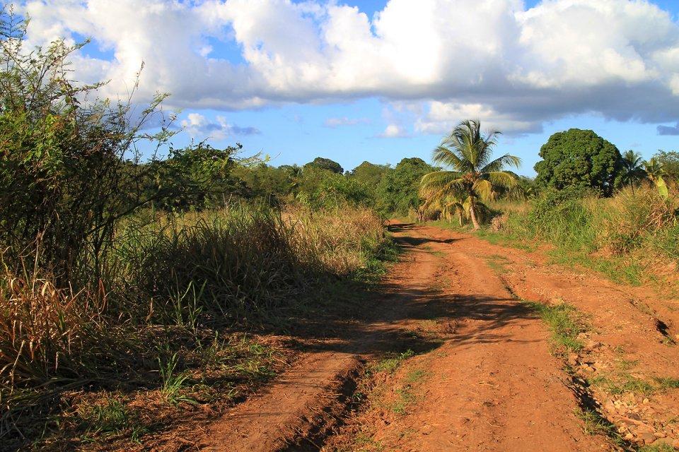 Sur le chemin qui pénétre dans la végétation