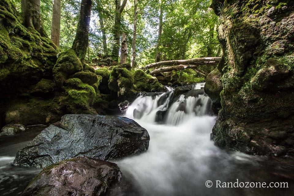 Une petite cascade dans la forêt