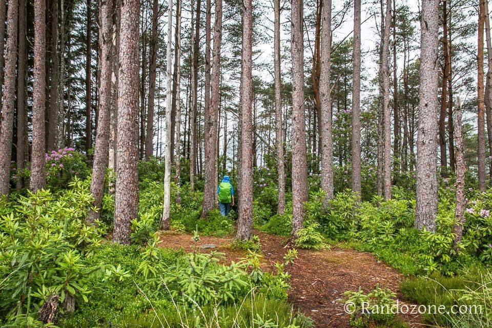 Une très belle forêt