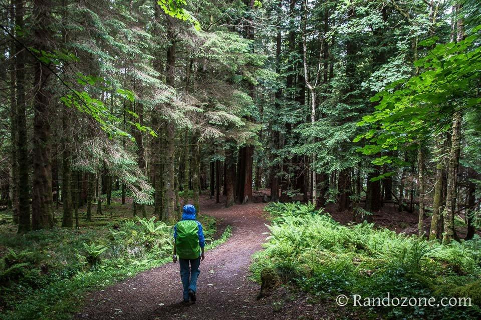 Superbe forêt à la fin de la balade