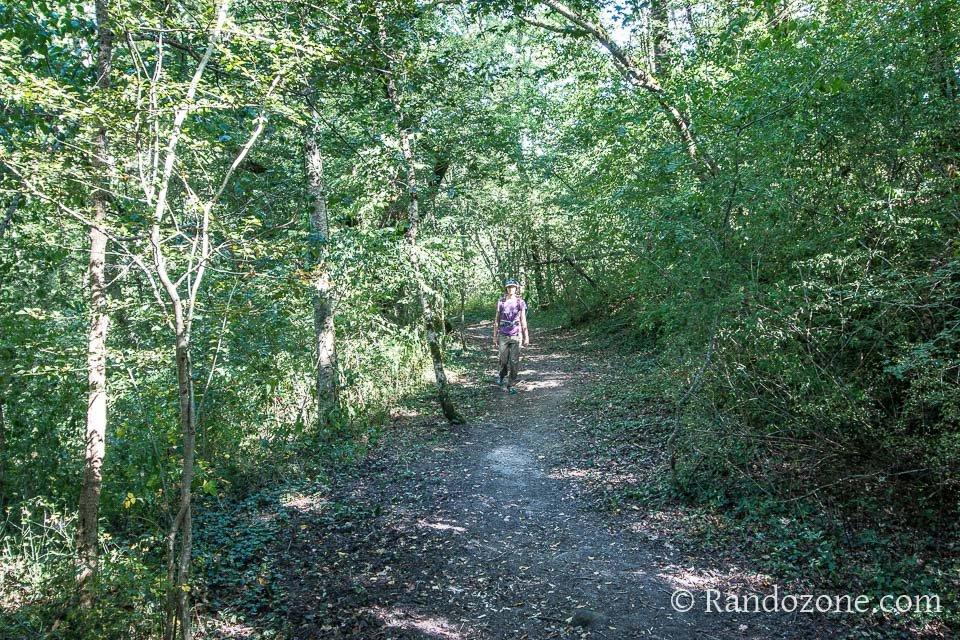 A l'ombre dans la forêt