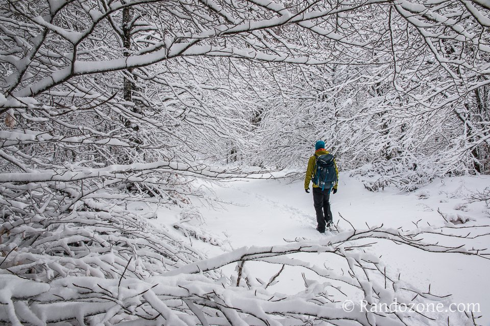 Balade dans la neige en Aubrac