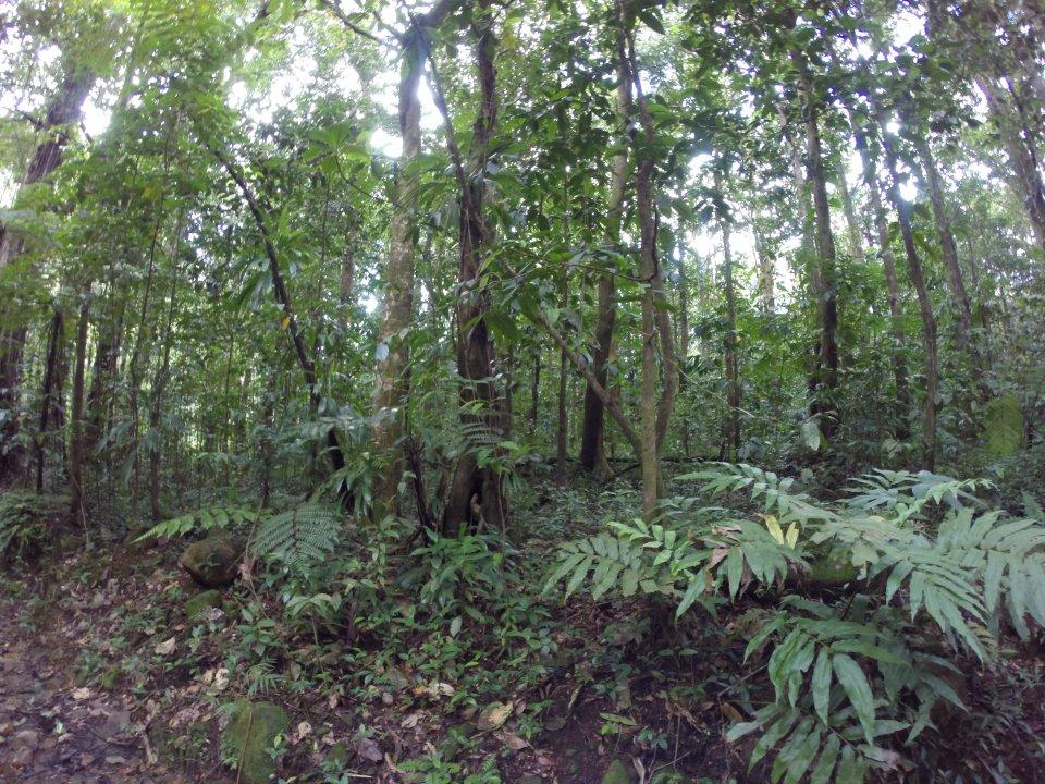 On continue dans la forêt