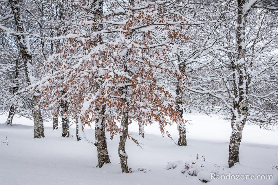 Balade : Balades en hiver sur Aubrac