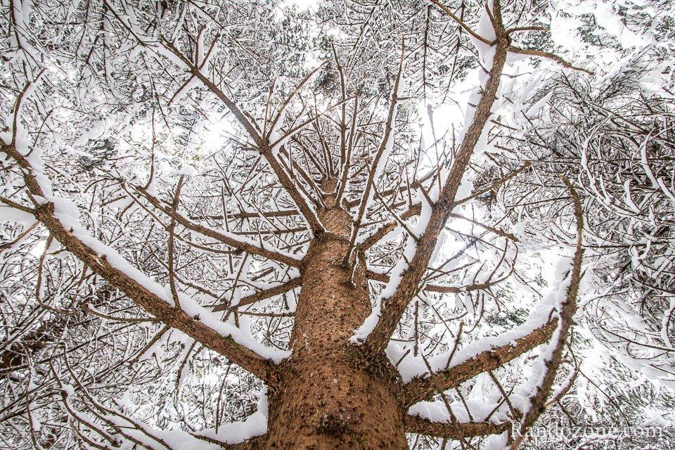 Dans la forêt recouverte de neige