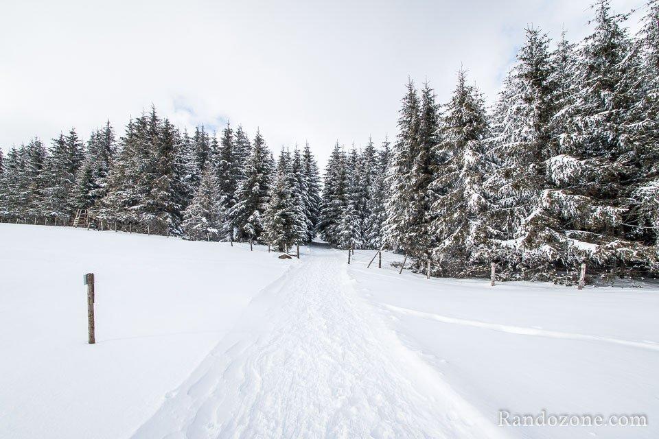 Passage sur les pistes de raquettes à neige de Sainte Urcize