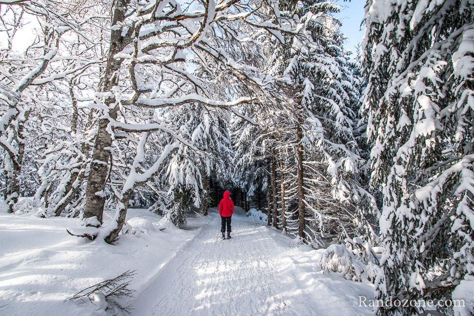 Le soleil éclaire la forêt et la neige
